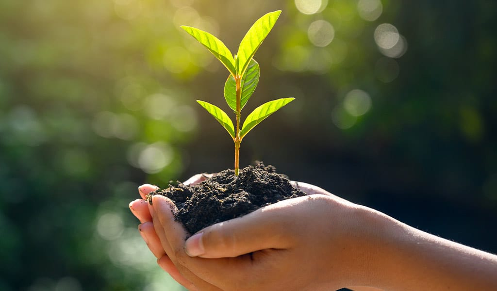 Human hands holding a plant in soil.